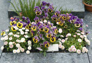 Blumenschmuck zur Bestattung in Gerlingen