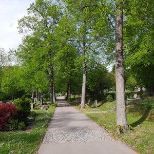Friedhof Untertürkheim Stuttgart Baumallee