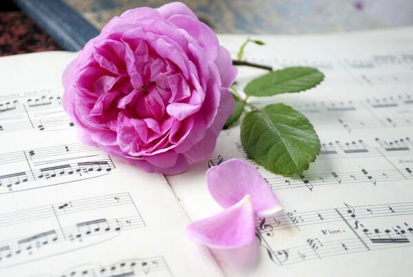 Trauerfeier - Eine Blume liegt auf einem Notenbuch Gesangsbuch